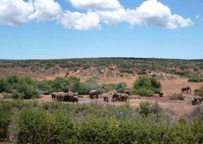 Addo Elephant Park Thanksgiving Day